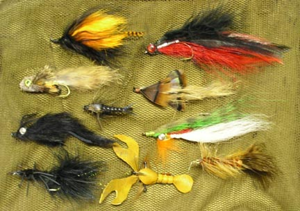catfish flies