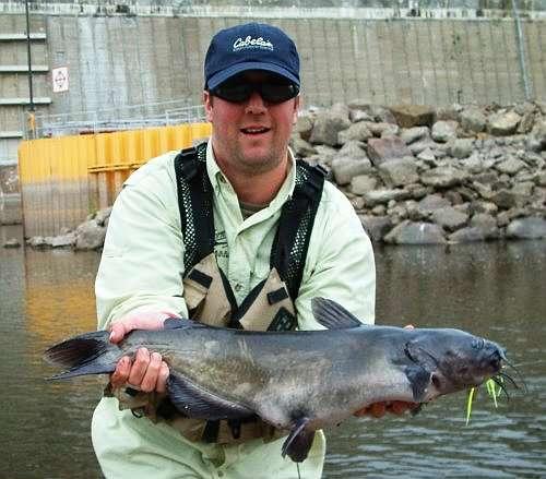 Rich Bailey Channel Catfish Spinnerbait
