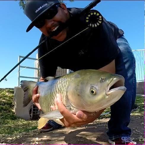 Grass carp for White amur fish