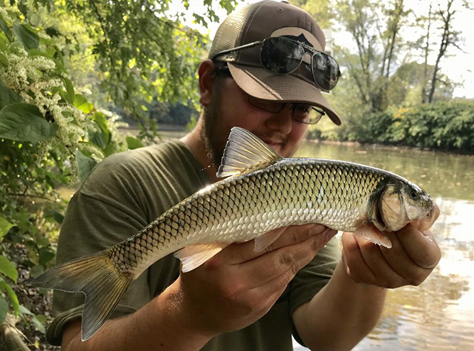 Fallfish, Pennsylvania Giant Chub, Mohawk Chub, Semotilus corporalis