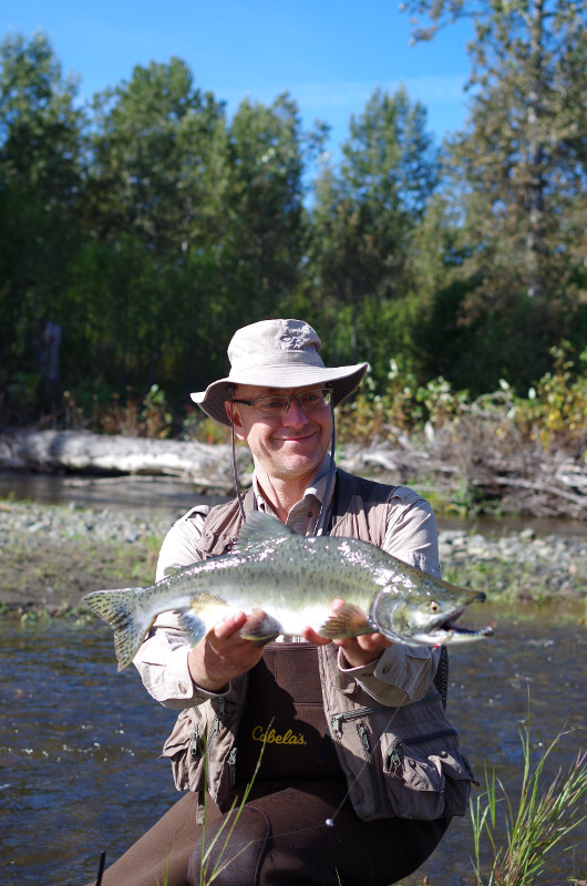 anchor river alaska pink salmon
