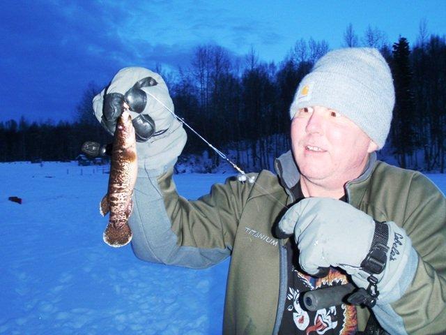 Alaska Blackfish - Dalia pectoralis