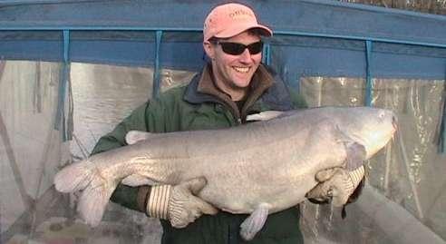Ictalurus furcatus - blue catfish