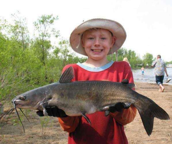 Ictalurus punctatus - channel catfish