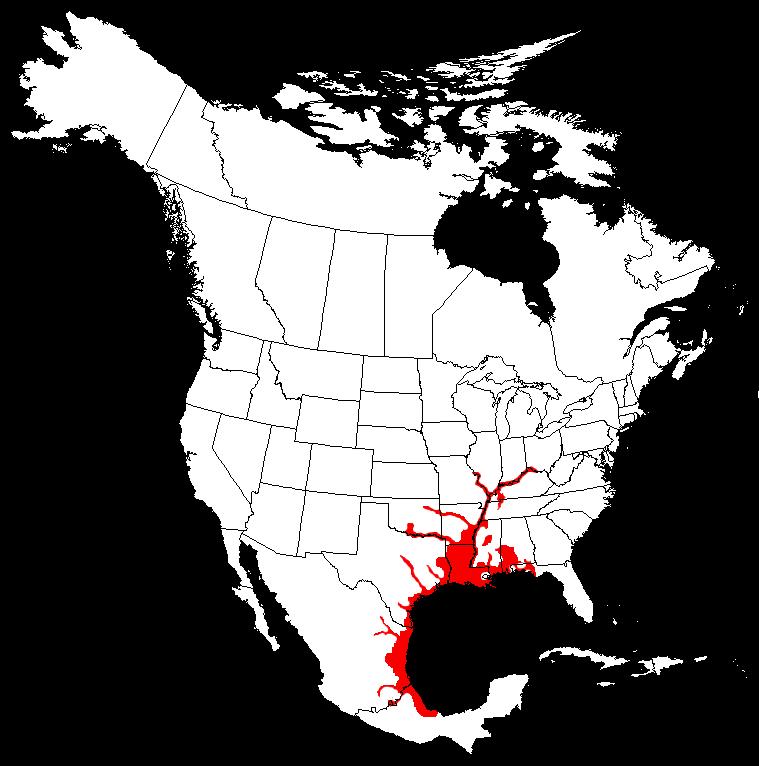 Alligators In Oklahoma Map.Alligator Gar Atractosteus Spatula