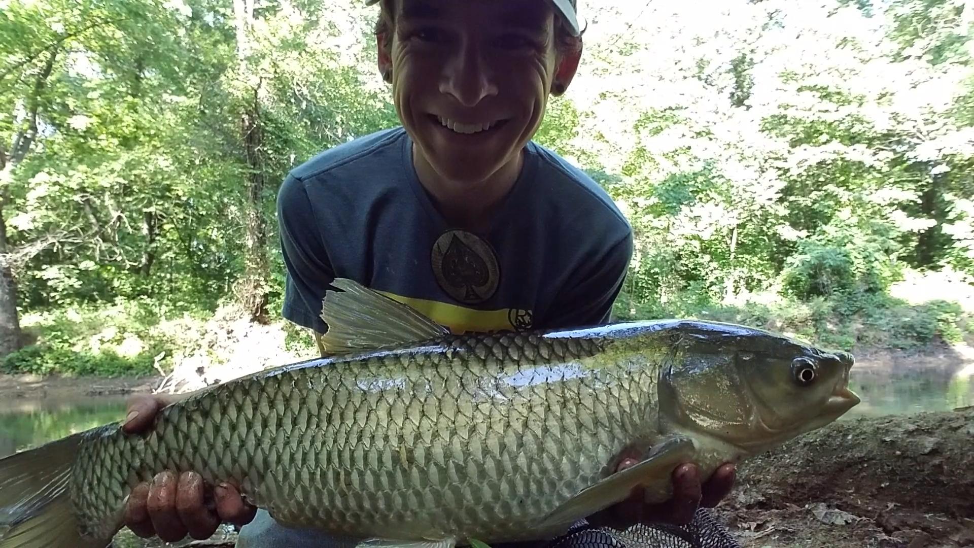 Carp grass isaacsfishingcorner for Grass carp fish