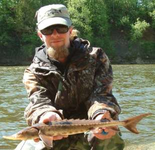 Lake Sturgeon from the Red Cedar River