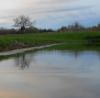 Minnesota Trophy Bullhead Waters