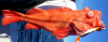 Shortraker Rockfish Sebastis borealis