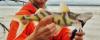 Brachyplatystoma juruense Zebra Catfish